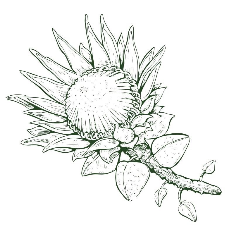 DODEL Blume
