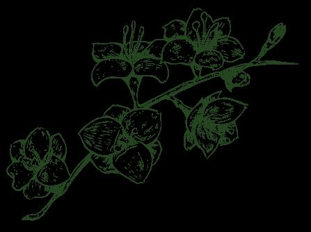 DODEL Pflanzen mobil